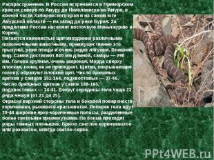 Распространение. В России встречается в Приморском крае на севере по Амуру до Ни