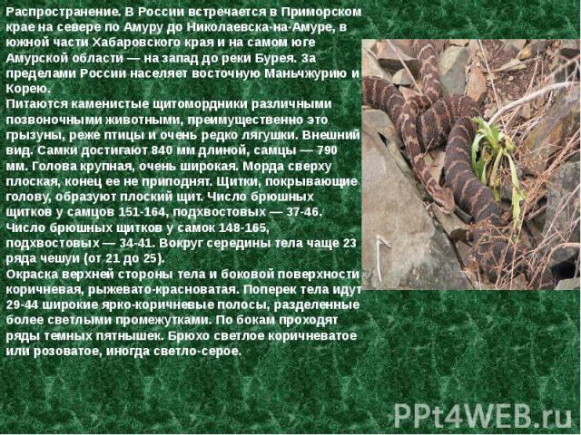 Распространение. В России встречается в Приморском крае на севере по Амуру до Николаевска-на-Амуре, в южной части Хабаровского края и на самом юге Амурской области — на запад до реки Бурея. За пределами России населяет восточную Маньчжурию и Корею. …