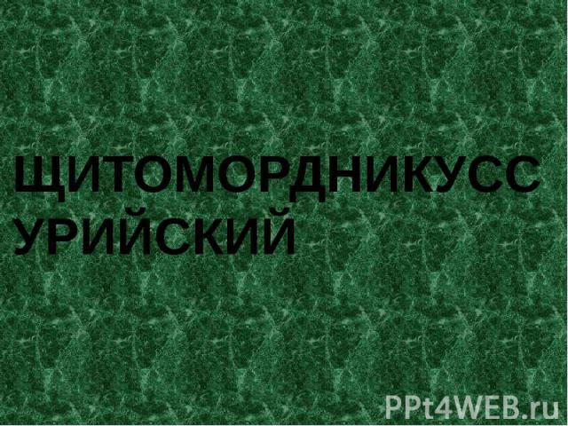 ЩИТОМОРДНИКУССУРИЙСКИЙ