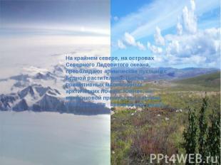 На крайнем севере, на островах Северного Ледовитого океана, преобладают арктичес