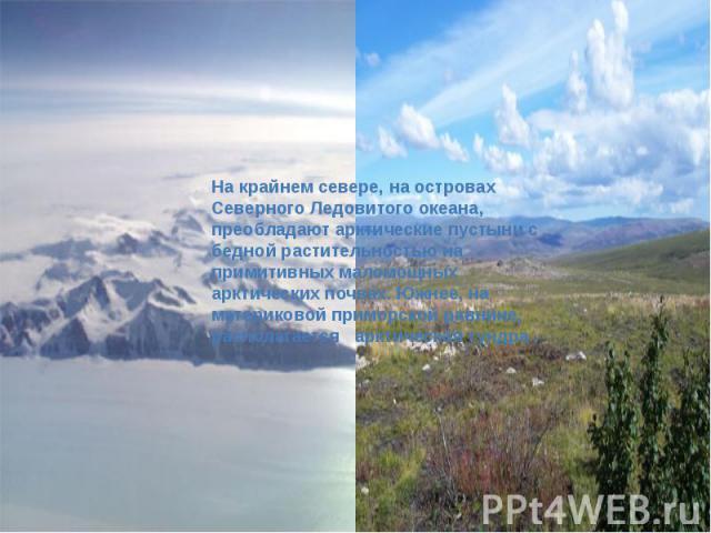 На крайнем севере, на островах Северного Ледовитого океана, преобладают арктические пустыни с бедной растительностью на примитивных маломощных арктических почвах. Южнее, на материковой приморской равнине, располагается арктическая тундра .
