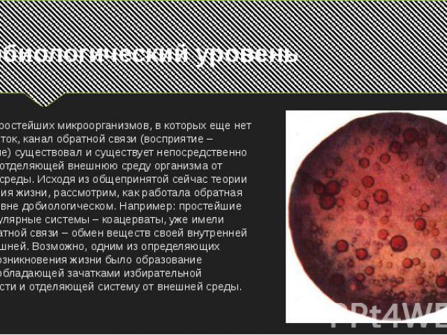 Добиологический уровеньНа уровне простейших микроорганизмов, в которых еще нет нервных клеток, канал обратной связи (восприятие – реагирование) существовал и существует непосредственно на границе, отделяющей внешнюю среду организма от внутренней сре…
