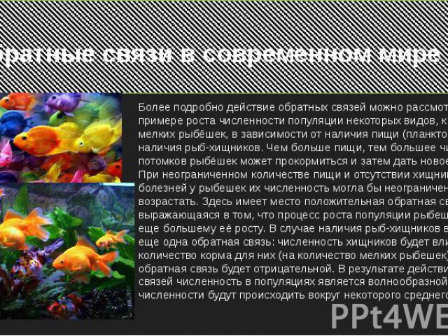 Обратные связи в современном миреБолее подробно действие обратных связей можно рассмотреть на примере роста численности популяции некоторых видов, к примеру, мелких рыбёшек, в зависимости от наличия пищи (планктона) и наличия рыб-хищников. Чем больш…