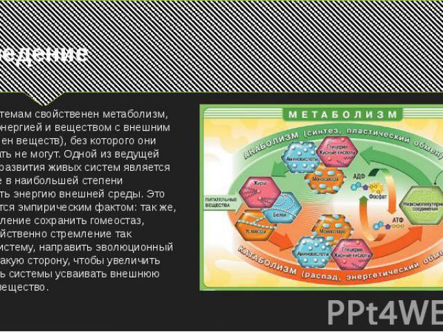 ВведениеЖивым системам свойственен метаболизм, т.е. обмен энергией и веществом с внешним миром (обмен веществ), без которого они существовать не могут. Одной из ведущей тенденций развития живых систем является стремление в наибольшей степени использ…