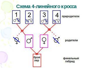 Схема 4-линейного кросса
