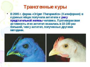 В 2005 г. фирма «Origen Therapeutics» (Калифорния) в куриных яйцах получила анти