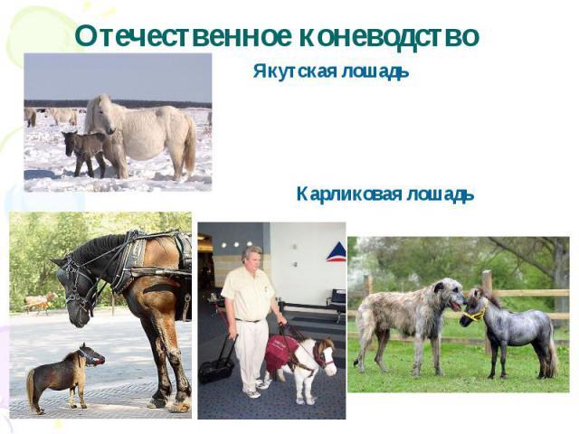 Отечественное коневодство