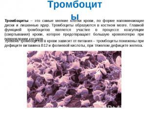Тромбоциты Тромбоциты – это самые мелкие клетки крови, по форме напоминающие дис