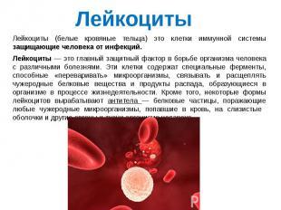 Лейкоциты (белые кровяные тельца) это клетки иммунной системы защищающие человек