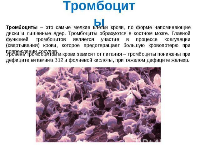Тромбоциты Тромбоциты – это самые мелкие клетки крови, по форме напоминающие диски и лишенные ядер. Тромбоциты образуются в костном мозге. Главной функцией тромбоцитов является участие в процессе коагуляции (свертывания) крови, которое предотвращает…