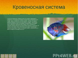 Кровеносная система У рыб она замкнутая, Сердце состоит из 2 камер: предсердия и