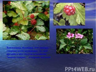 Княженика, поленика, или мамура — северная ягода костяника. За свой аромат и вку
