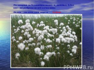 Посмотришь на болотистую поляну, и , кажется, будто кто – то разбросал по ней кл