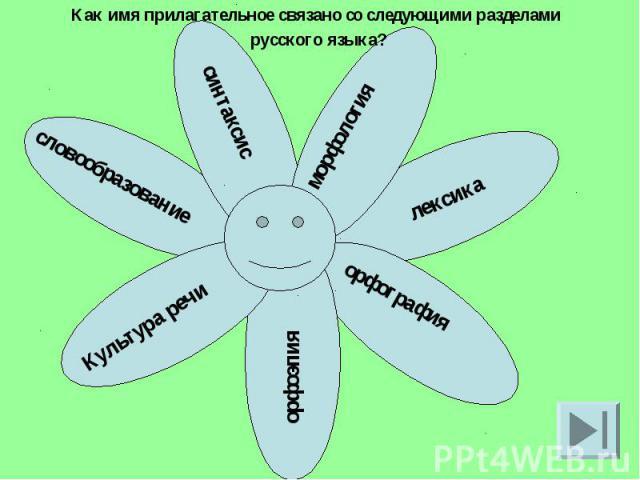 Как имя прилагательное связано со следующими разделами русского языка?