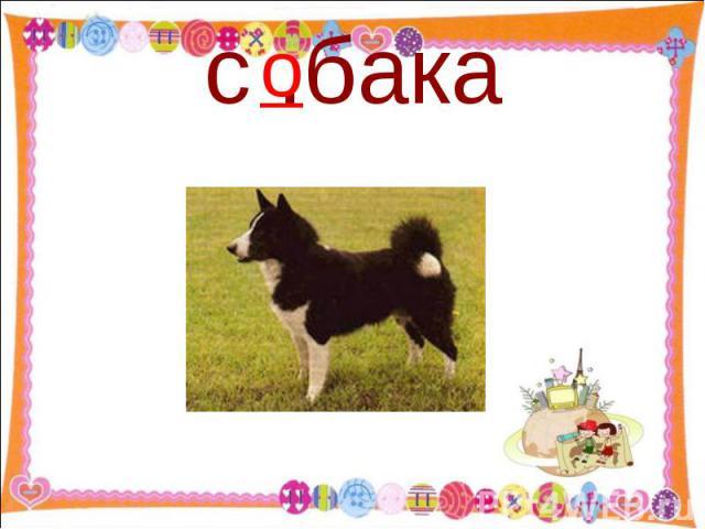 с .бака