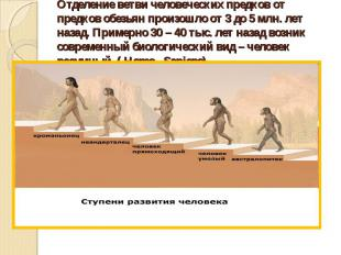 Отделение ветви человеческих предков от предков обезьян произошло от 3 до 5 млн.