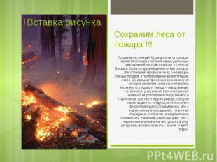 Сохраним лес живым! Охрана лесов от пожаров является сложной системой самых разл