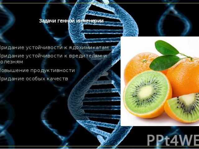 Задачи генной инженерии Придание устойчивости к ядохимикатам Придание устойчивости к вредителям и болезням Повышение продуктивности Придание особых качеств