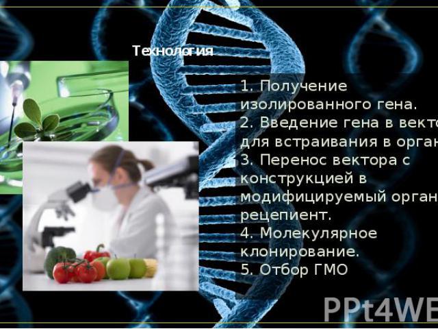 Технология 1. Получение изолированного гена. 2. Введение гена в вектор для встраивания в организм. 3. Перенос вектора с конструкцией в модифицируемый организм-рецепиент. 4. Молекулярное клонирование. 5. Отбор ГМО