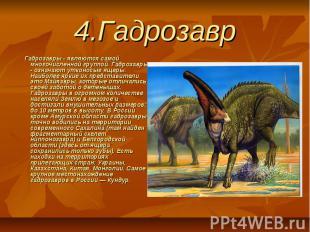 4.Гадрозавр Гадрозавры - являются самой многочисленной группой. Гадрозавры