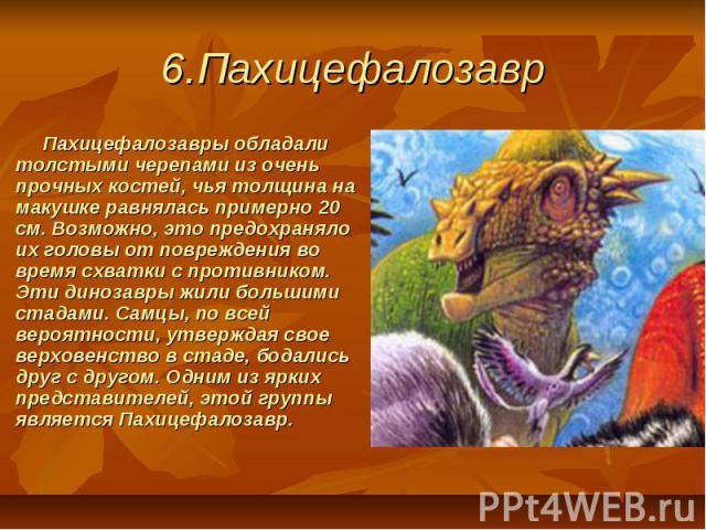 6.Пахицефалозавр Пахицефалозавры обладали толстыми черепами из очень прочных костей, чья толщина на макушке равнялась примерно 20 см. Возможно, это предохраняло их головы от повреждения во время схватки с противником. Эти динозавры жили большим…