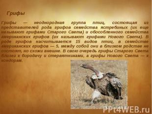 Грифы Грифы — неоднородная группа птиц, состоящая из представителей рода грифов
