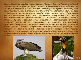 Зона обитания грифов охватывает Южную Европу (включая Крым), Центральную и Южную