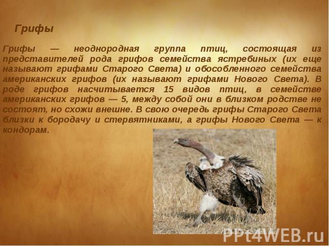 Грифы Грифы — неоднородная группа птиц, состоящая из представителей рода грифов семейства ястребиных (их еще называют грифами Старого Света) и обособленного семейства американских грифов (их называют грифами Нового Света). В роде грифов насчитываетс…