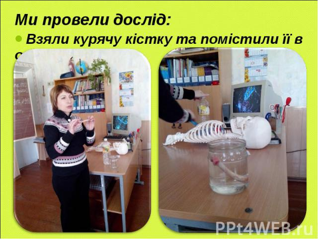 Ми провели дослід: Ми провели дослід: Взяли курячу кістку та помістили її в оцет.