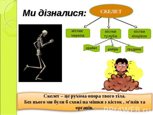 Ми дізналися: Скелет – це рухома опора твого тіла. Без нього ми були б схожі на мішки з кісток , м'язів та органів.
