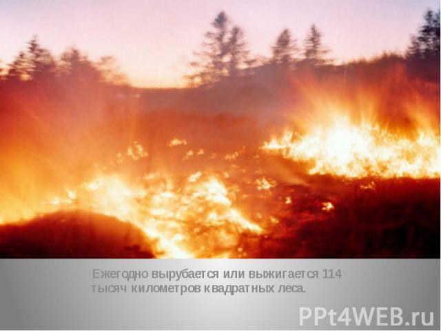 Ежегодно вырубается или выжигается 114 тысяч километров квадратных леса.