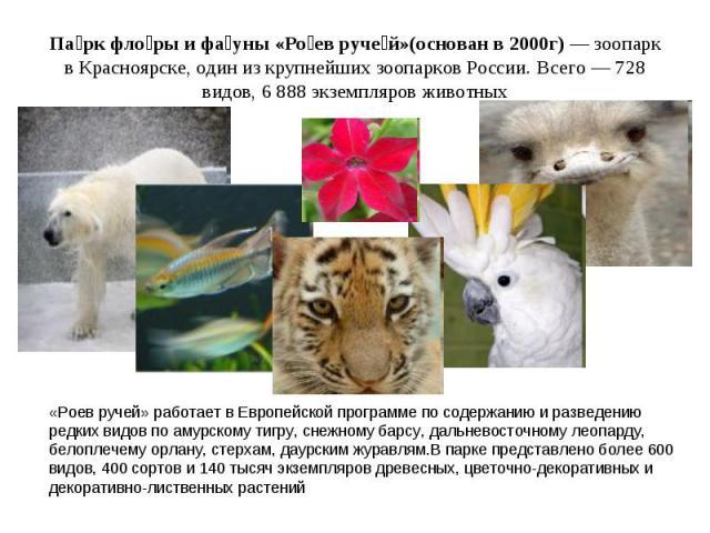 Па рк фло ры и фа уны «Ро ев руче й»(основан в 2000г)— зоопарк в Красноярске, один из крупнейших зоопарков России. Всего — 728 видов, 6 888 экземпляров животных «Роев ручей» работает в Европейской программе по содержанию и разведению редких видов п…