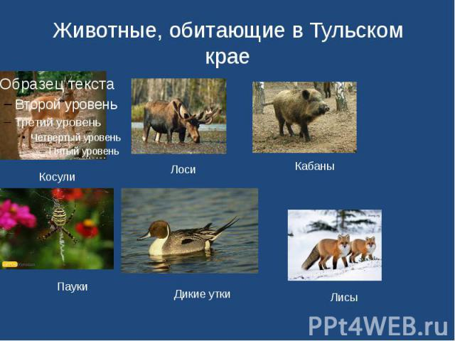 Животные, обитающие в Тульском крае