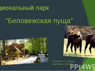 """Национальный парк """"Беловежская пуща"""" Учащийся 11 класса Борткевич Сергей"""