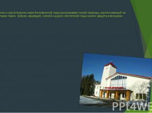 О животном и растительном мире Беловежской пущи рассказывает музей природы, расп