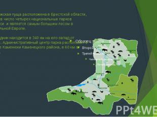 Беловежская пуща расположена в Брестской области, входит в число четырех национа