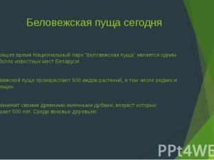 """Беловежская пуща сегодня В настоящее время Национальный парк """"Беловежская пуща"""""""