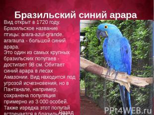 Вид открыт в 1720 году. Бразильское название птицы: arara-azul-grande, ararauna