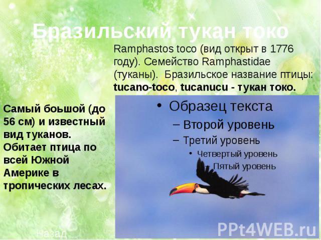 Ramphastos toco (вид открыт в 1776 году). Семейство Ramphastidae (туканы). Бразильское название птицы: tucano-toco, tucanucu - тукан токо. Самый боьшой (до 56 см) и известный вид туканов. Обитает птица по всей Южной Америке в тропических лесах.