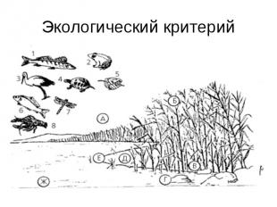 Экологический критерий