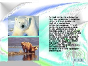 Белый медведь обитает в арктическом поясе, окраска шерсти белая, питается рыбой