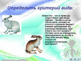 Определить критерий вида:Известно , что в природе существуют два вида зайцев – б