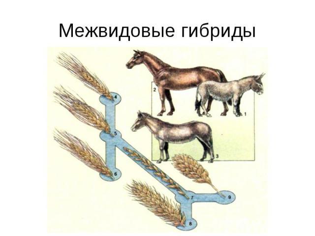 Межвидовые гибриды