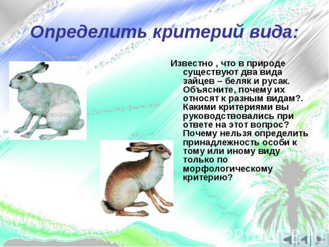Определить критерий вида:Известно , что в природе существуют два вида зайцев – беляк и русак. Объясните, почему их относят к разным видам?. Какими критериями вы руководствовались при ответе на этот вопрос? Почему нельзя определить принадлежность осо…