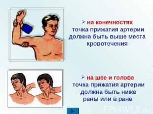 на конечностях точка прижатия артерии должна быть выше места кровотечения на шее