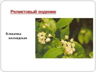 Реликтовый эндемикКлекачка колхидская