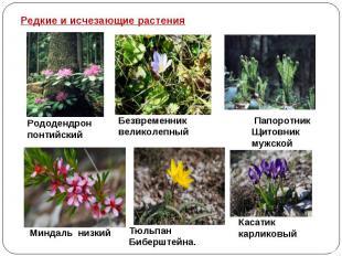 Редкие и исчезающие растения Рододендрон понтийский Безвременник великолепный Па