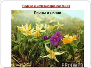 Редкие и исчезающие растения Пионы и лилии