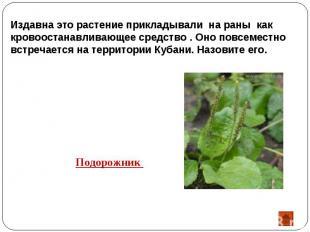 Издавна это растение прикладывали на раны как кровоостанавливающее средство . Он
