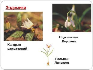 Эндемики Кандык кавказский Подснежник Воронова Тюльпан Липского